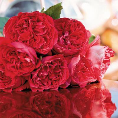 Tổng hợp các loài hoa hồng đỏ đang hot hiện nay