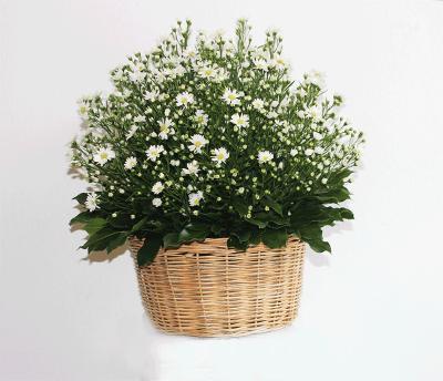 Giỏ hoa Tình yêu nhẹ nhàng