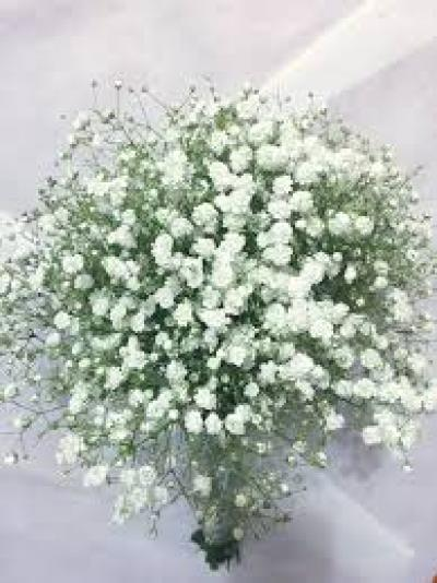 Ý nghĩa Hoa salem trắng