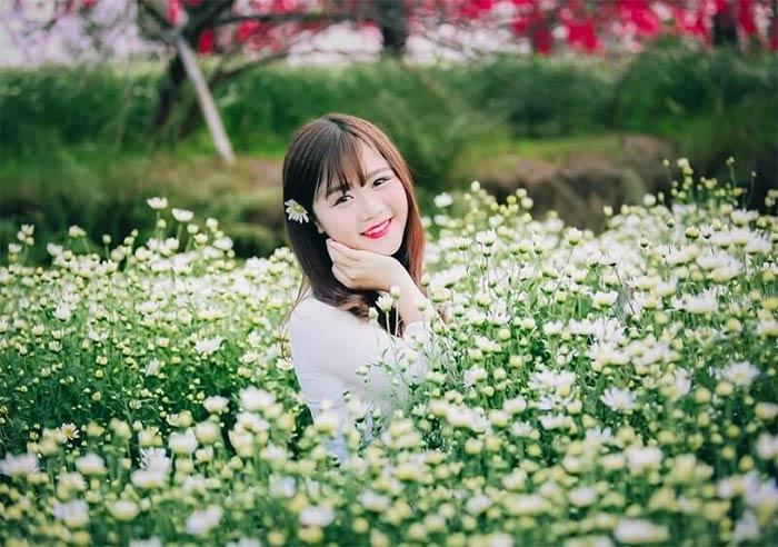 ý nghĩa hoa cúc dại đẹp rực rỡ