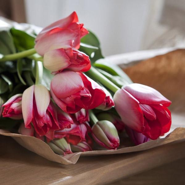 Hoa-Tulip-do-tuong-trung-cho-su-manh-me