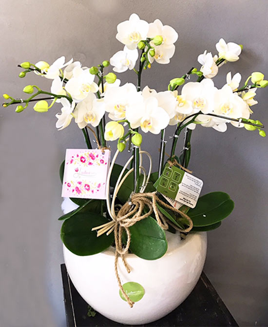 Hình ảnh hoa lan hồ điệp mang nét độc đáo, mới lạ
