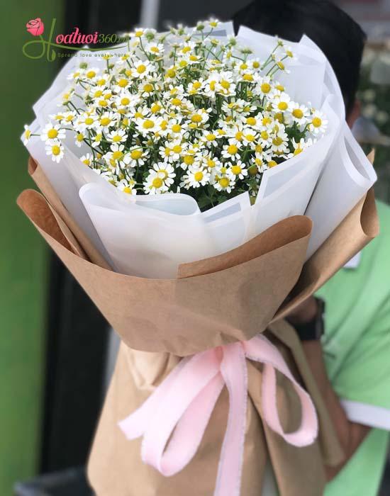 Những đóa hoa Cúc Tana mang hương đồng cỏ nội đến với nơi phố thị