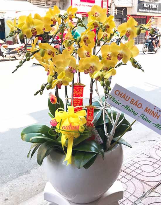 Màu vàng của lan hồ điệp tết được ưa chuộng