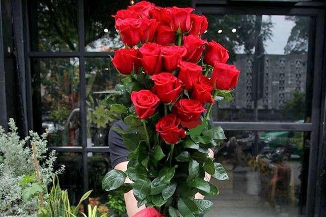 Chiều cao hoa hồng Ecuador rất lớn
