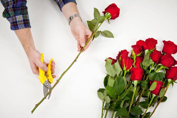 Cách cắm hoa hồng đơn giản và đẹp