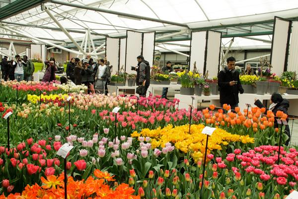 Vườn hoa tươi dịch vụ điện hoa quận  Thủ Đức
