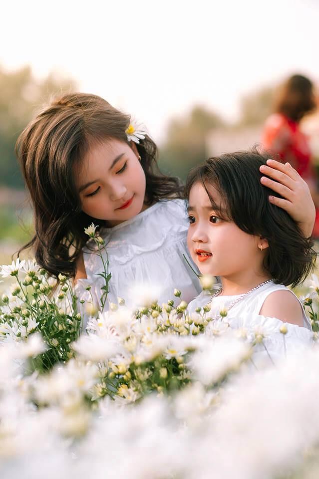 Mua hoa cúc họa mi tinh khôi - Hoatuoi360.vn