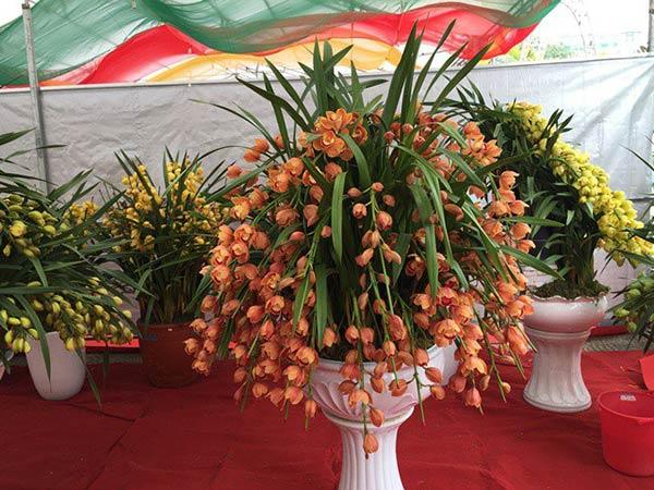 Cách chăm sóc hoa địa lan trước tết