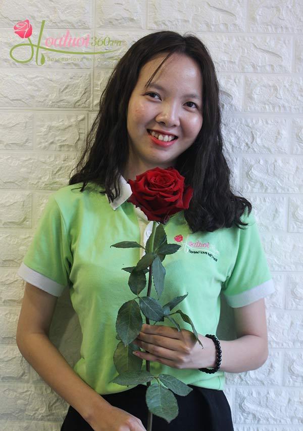 những bông hoa hồng đỏ đẹp nhất