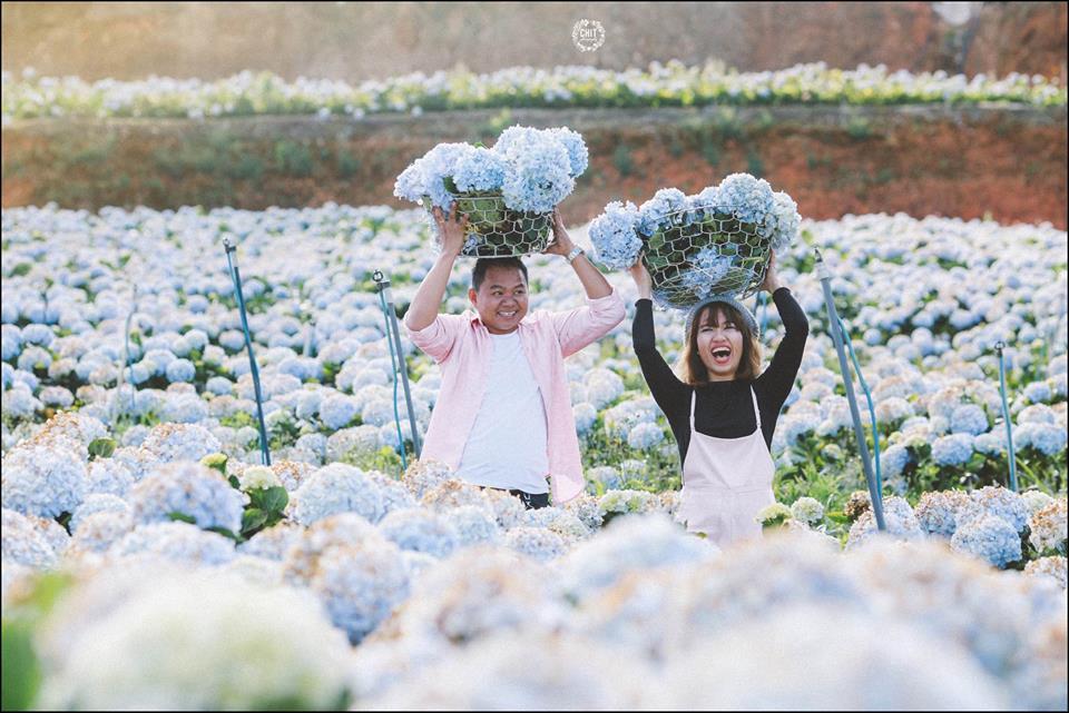 Mùa hoa cẩm tú cầu vào tháng mấy