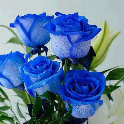 Bó hoa hồng xanh đẹp