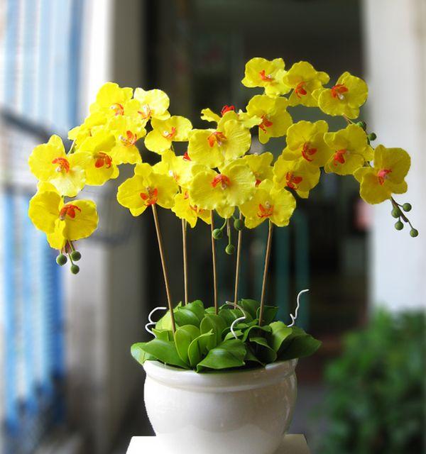 Hoa Phong Lan vàng đẹp tặng sinh nhật được ưa chuộng hiện nay