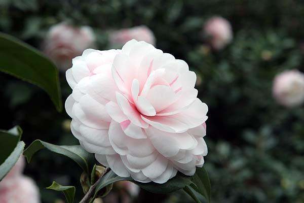 top 15 loài hoa tượng trưng cho tình mẫu tử