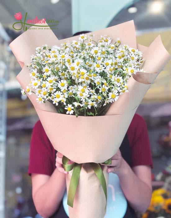 Những nụ hoa Cúc Tana Hà Lan như mặt Trời nhỏ ấm áp