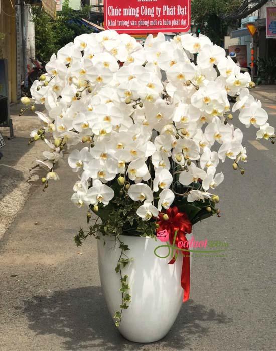 Hoa lan hồ điệp trắng tặng bạn gái