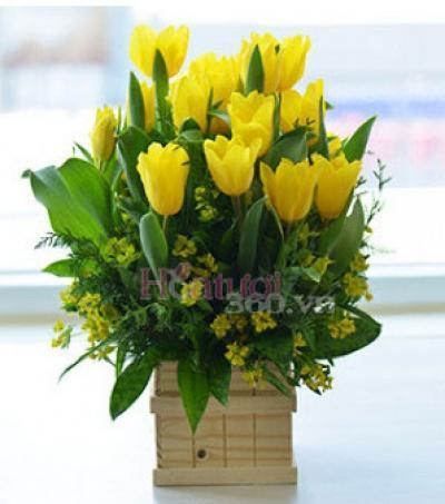 Hoa tulip xin lỗi rực rỡ như nắng mai