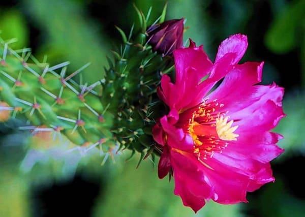 hoa xương rồng đẹp nhất