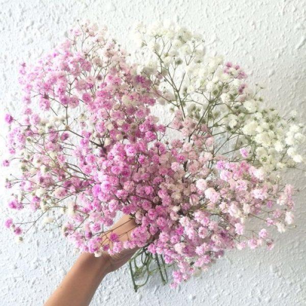 Hoa baby làm hoa cầm tay cô dâu đơn giản