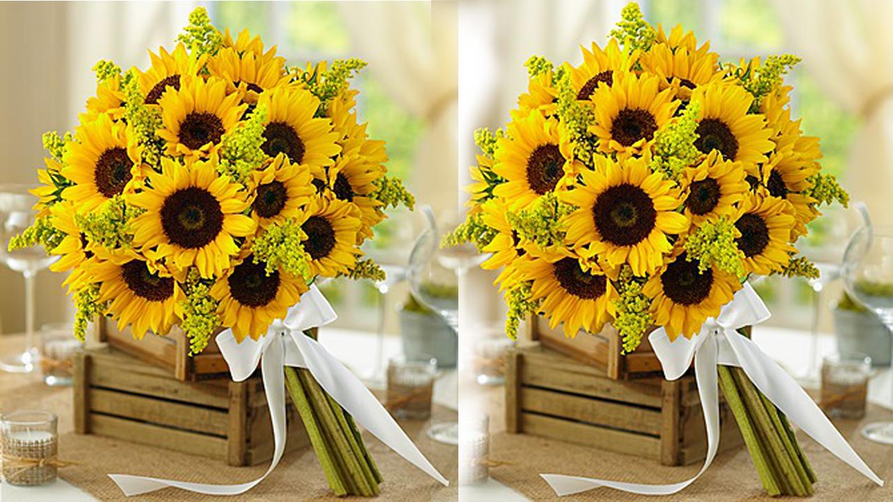 Những đóa hoa hướng dương xinh đẹp luôn hướng về ánh mặt trời và đổi lại, ánh mặt trời tỏa rạng chiếu xuống những đóa hoa làm tỏ rạng dự ấm áp ...