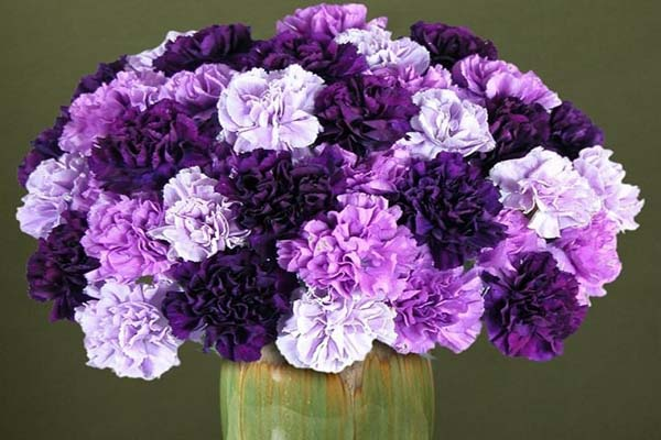Hoa màu tím đẹp nhất thế giới