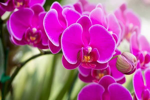 Hoa màu tím mang vẻ đẹp lãng mạn