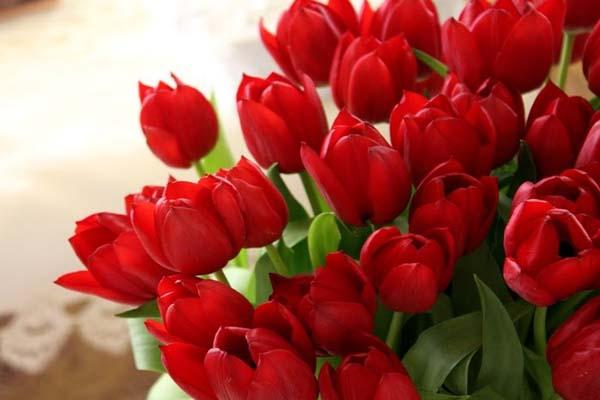 Tuyển tập các loại hoa có màu đỏ mang tượng trưng cho tình yêu Tuyen-tap-cac-loai-hoa-co-mau-do-mang-tuong-trung-cho-tinh-yeu-04
